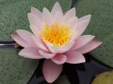 Rose Arey